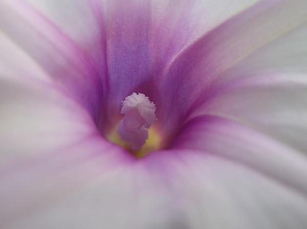 Purple To The Core Print by Estephy Sabin Figueroa