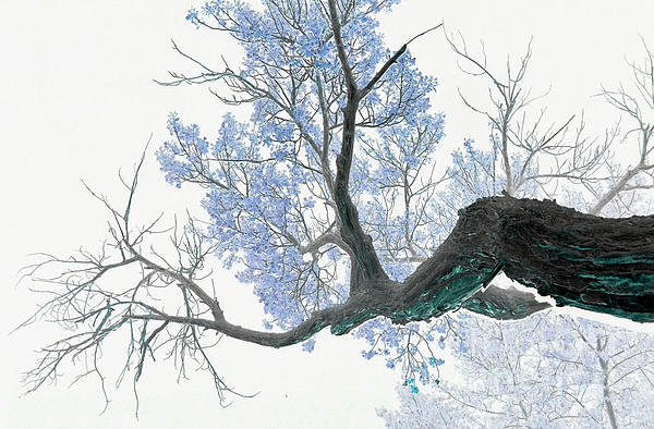 Purple Tree 1 Print by Rebecca Margraf