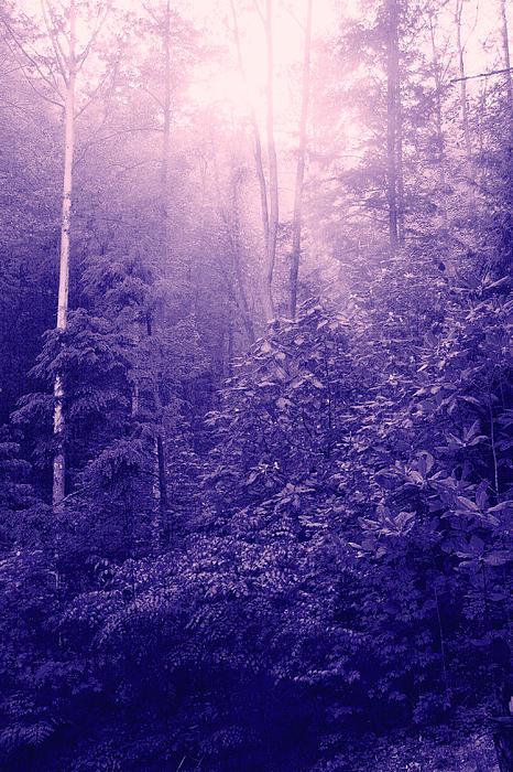 Purple Woods Print by Nina Fosdick