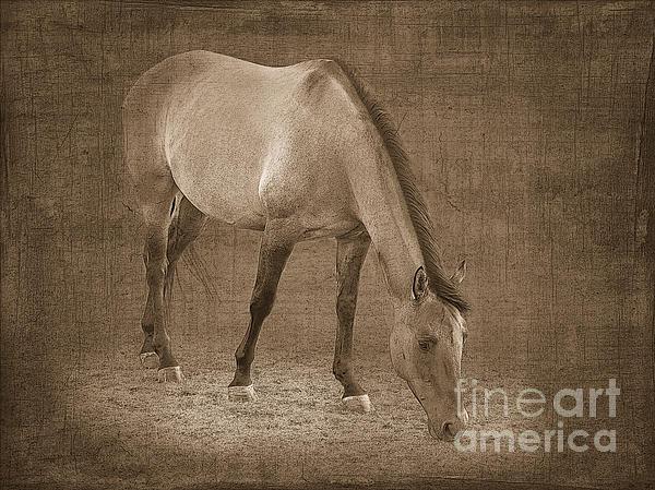 Quarter Horse In Sepia Print by Betty LaRue