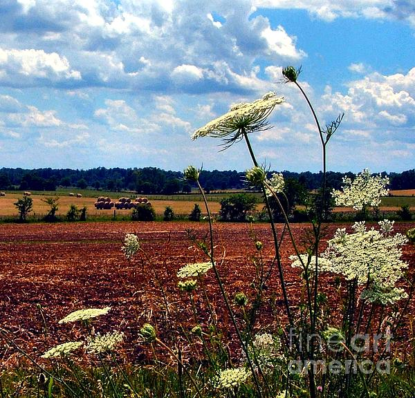 Queen Annes Lace And Hay Bales Print by Julie Dant