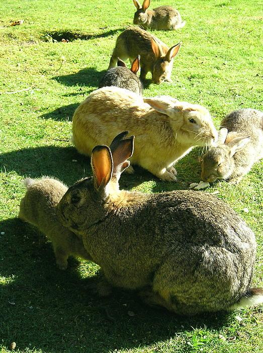Helen Fern - Rabbits