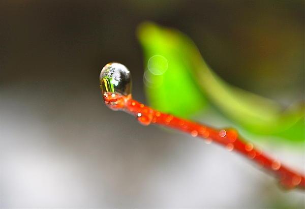 Gloria Warren - rain drops Tiny Wonder