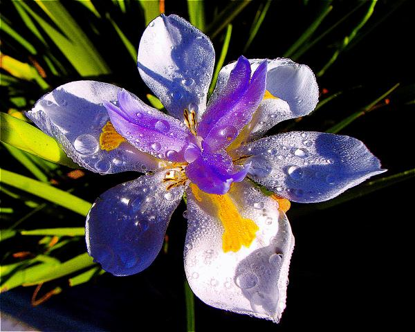 Jerome Stumphauzer - Rain Flower II