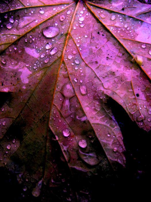 Allen n Lehman - Rain On Fall