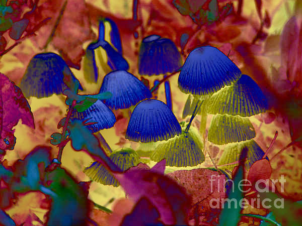 Rainbow Mushrooms Print by Erica Hanel