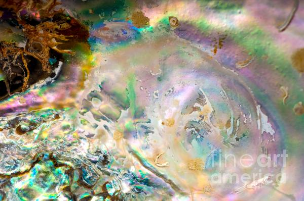 Rainbows And Seaweed Photograph  - Rainbows And Seaweed Fine Art Print