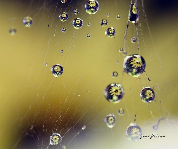Raindrops On The Spider Web Print by Yumi Johnson