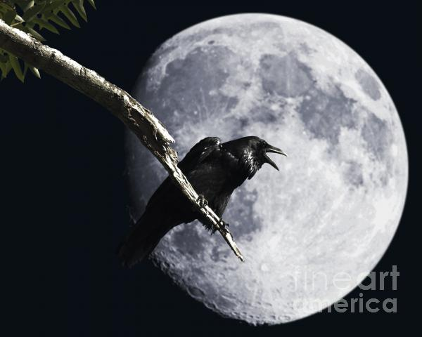 Raven Barking At The Moon Print by Wingsdomain Art and Photography