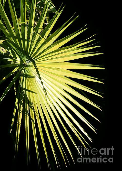 Rays Of Light Print by Sabrina L Ryan