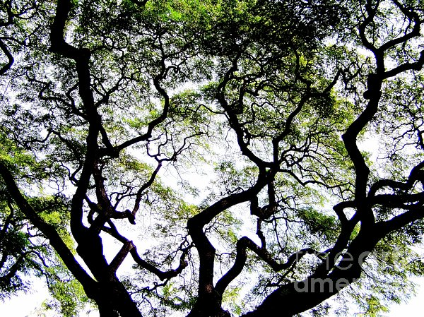 Reach For The Sky Print by Karen Wiles