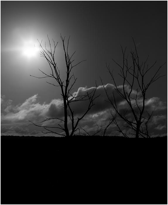 Reach For The Sun Print by Nigel Jones