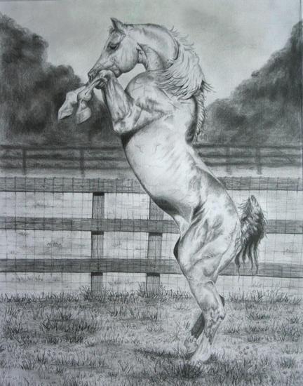 art journal - The Horse Forum