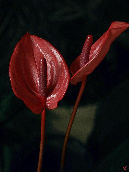 Barbara Middleton - Red Again