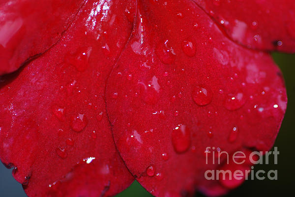 Red And Wet Print by Paul Ward