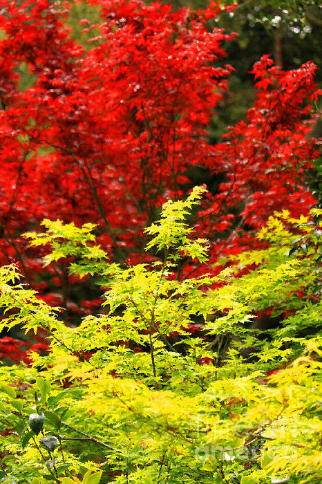 Red And Yellow Leaves Print by James Eddy