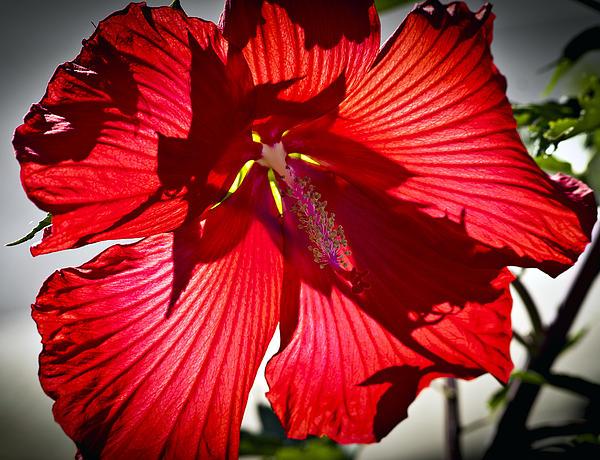 Steve Buckenberger - Red as Flower