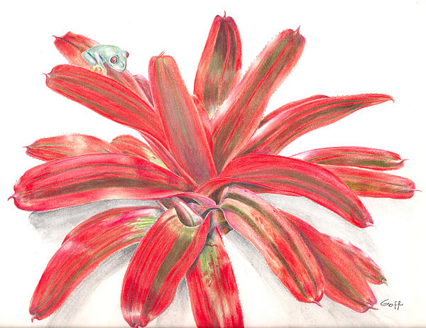 Red-eyed Tree Frog On Bromeliad Painting
