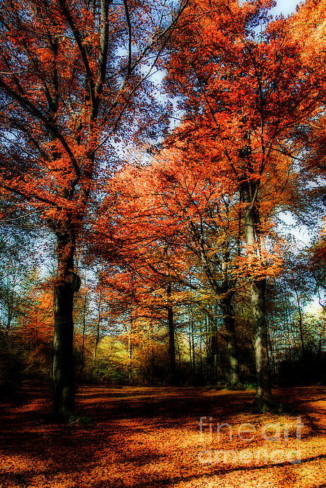 Red Fall Print by Hannes Cmarits