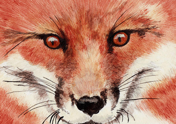 Tricia Griffith - Red Fox