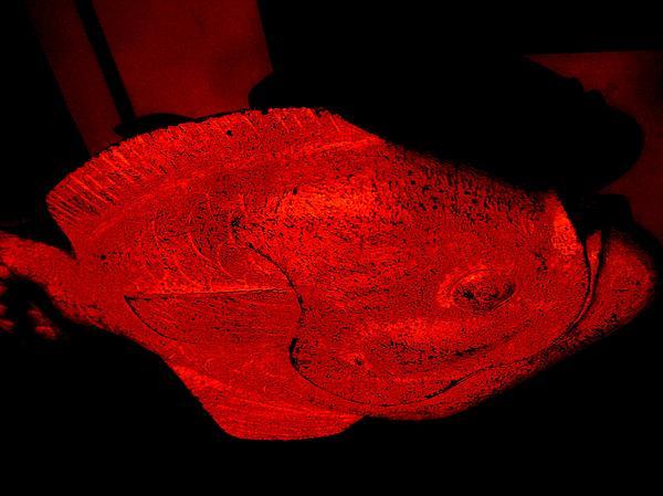 Red Herring Print by Allen n Lehman