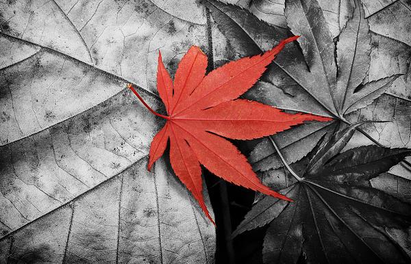 Joye Ardyn Durham - Red