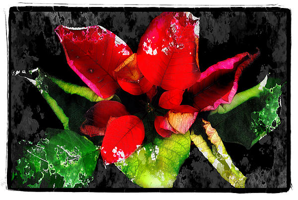Red Leaves Print by Mauro Celotti