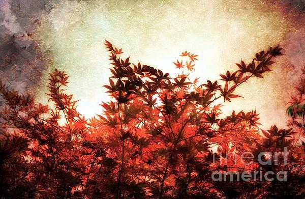 Elaine Manley - Red Leaves on Trees