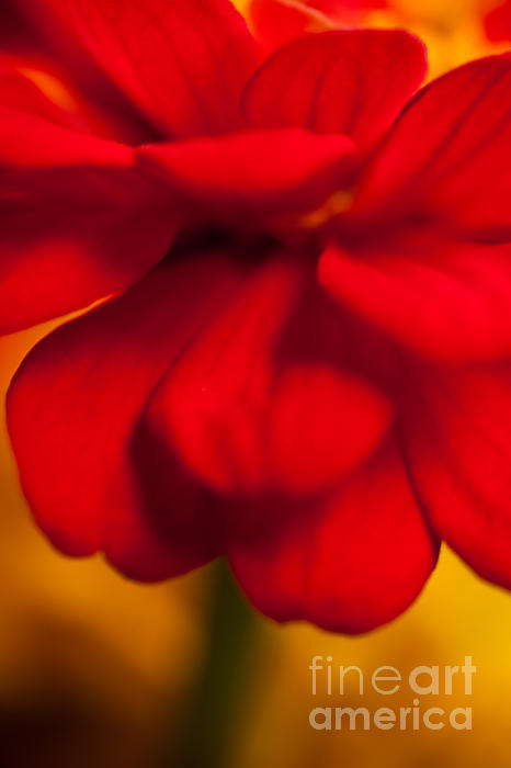 Sue OConnor - Red Red Divine