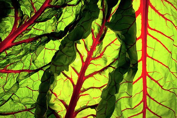 Red River Print by Bobby Villapando