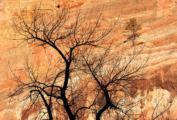 Red Rocks And Trees Print by Adam Pender