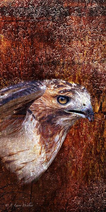 Red-tailed Hawk Print by J Larry Walker