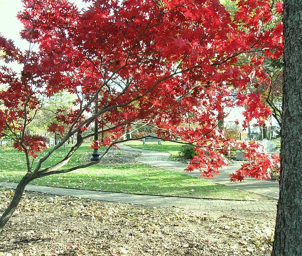 Red Tree Print by Todd Sherlock