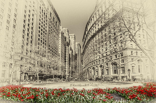 Red Tulips Print by Svetlana Sewell