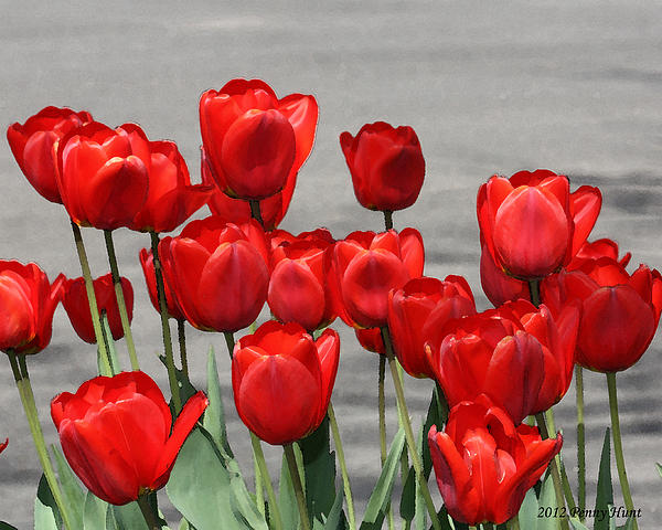 Penny Hunt - Red Tulips Welcome Spring