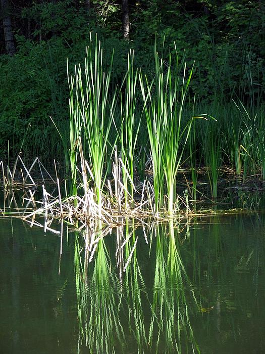 Chris Gudger - Reeds and Reflections