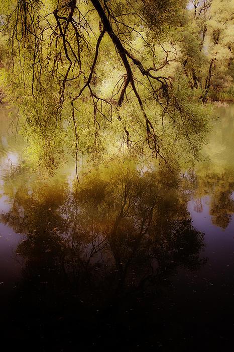 Reflection Print by Joana Kruse
