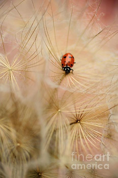 Iris Greenwell - Remembering Spring...