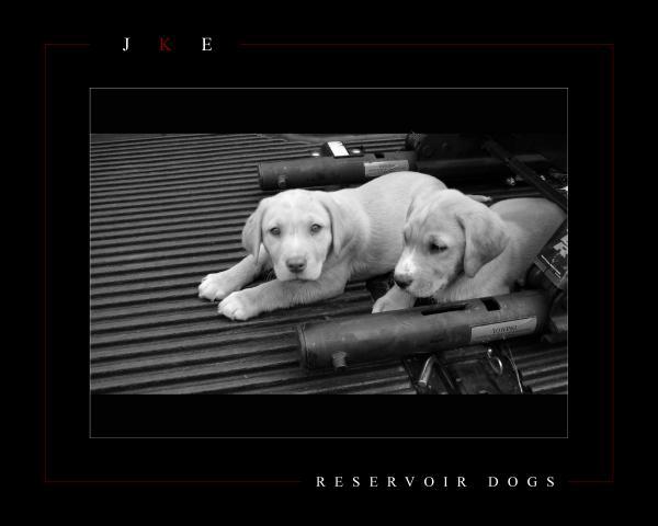 Reservoir Dogs Print by Jonathan Ellis Keys