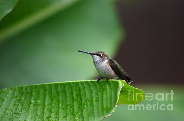 Kathy Gibbons - Resting On A Banana Leaf