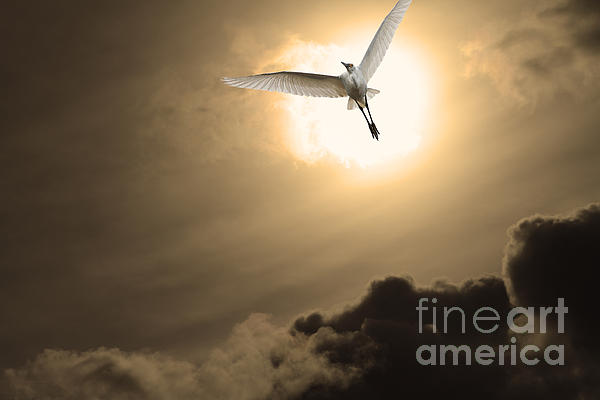 Return To Eternity . Gold Cut Print by Wingsdomain Art and Photography