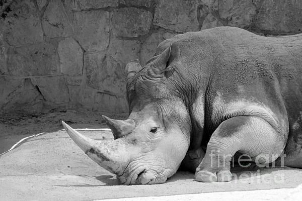 Alycia Christine - Rhino Nap 2