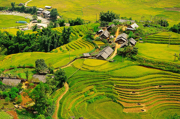 Rice field terraces by nutexzles for Movie schedule terraces