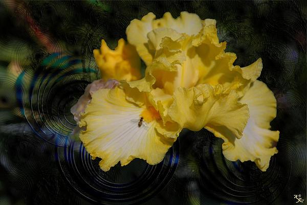 Rippling Iris Print by Kelly Rader