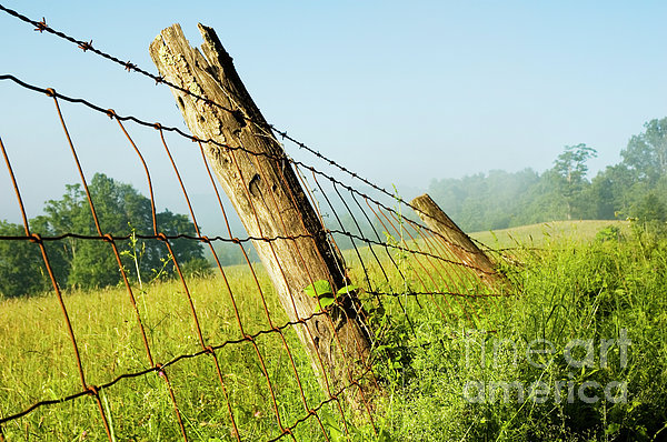 Rising Mist With Falling Fence Print by Thomas R Fletcher