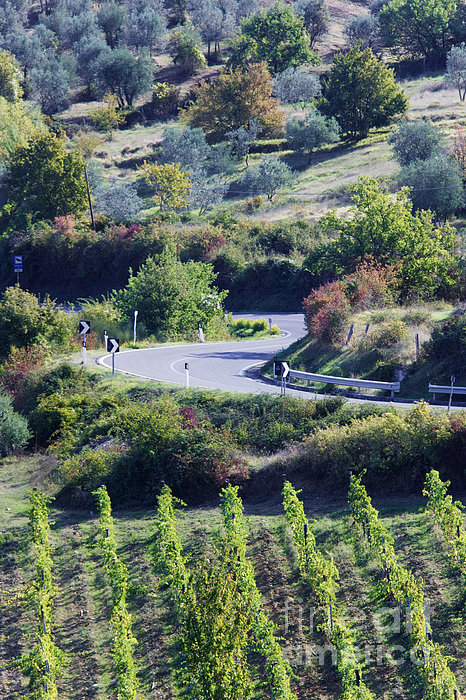 Road Winding Through Vineyard And Olive Trees Print by Jeremy Woodhouse