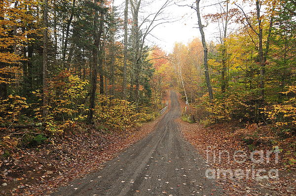 Roads Less Traveled Print by Catherine Reusch  Daley