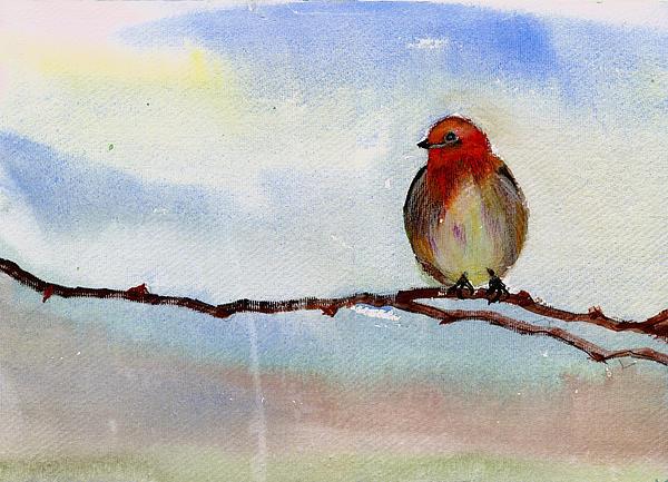 Robin 1 Print by Anil Nene