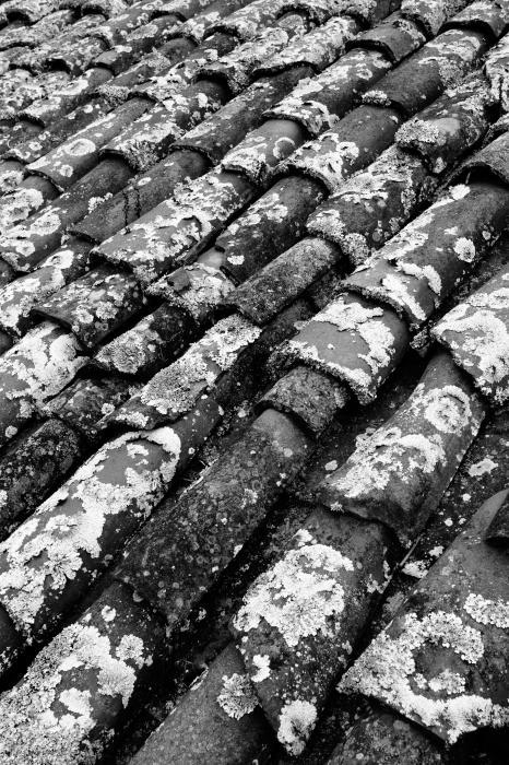 Roof Tiles Print by Gaspar Avila