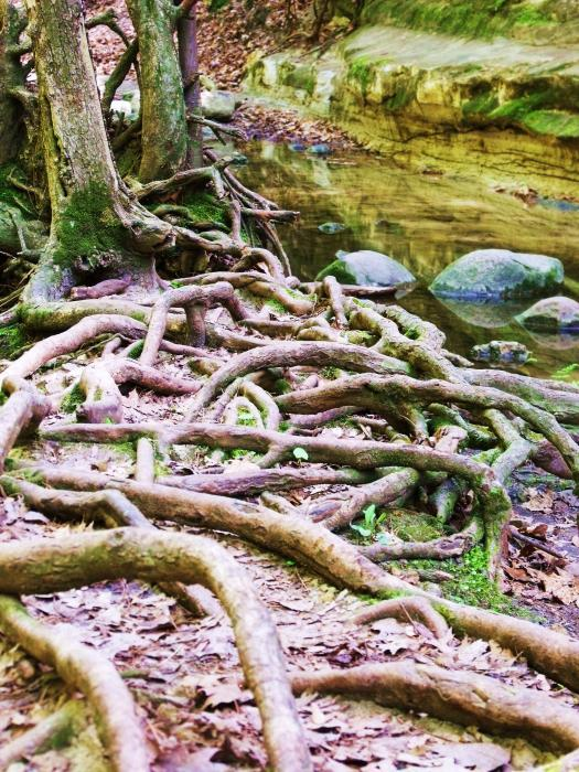Roots And Rocks I Print by Anna Villarreal Garbis